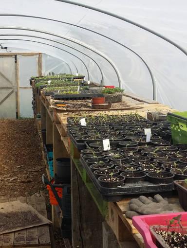 Polytunnel. Seedlings sale