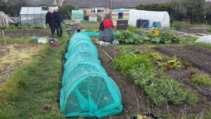 Allotment @ Jubilee allotments,